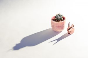 Product photography of rabbit and cactus in Brisbane.